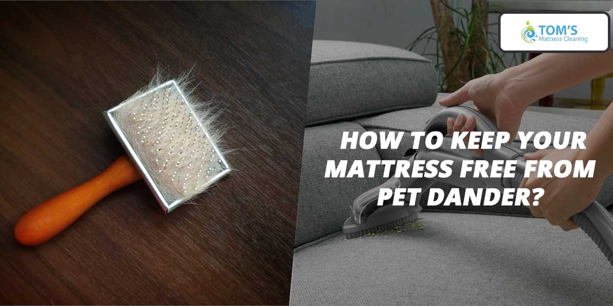 How to Keep Your Mattress Free from Pet Dander